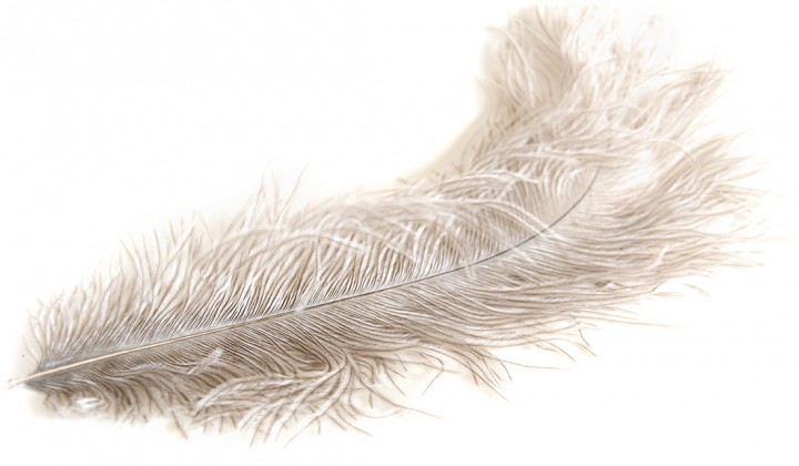 Fly Scene Ostrich feather