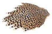 Jungle Cock Cape breeded