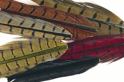 Veniard Cock Pheasant Natural and Dyed Mixed